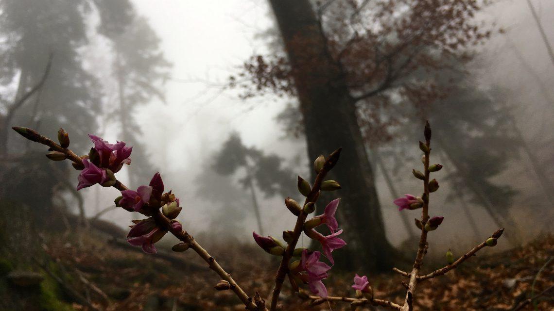 Im Wald durch den Nebel den Berg hinauf – das hat was!